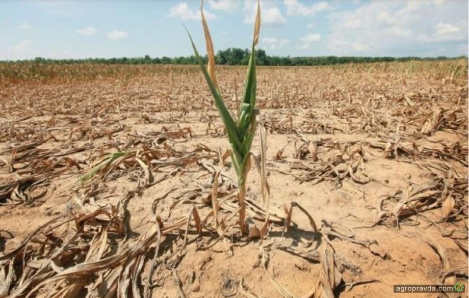 Погода создает риски для посевов в Украине