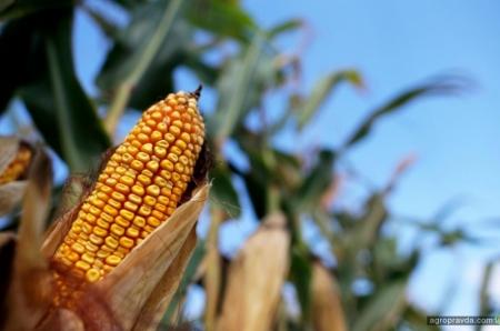 Как малому агробизнесу найти рынки сбыта продукции