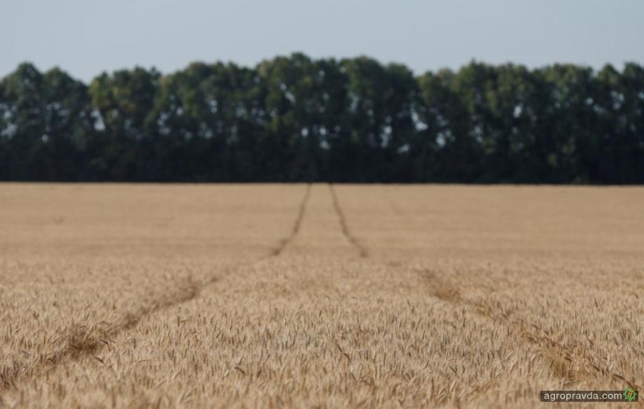 Украина поставила новый рекорд по экспорту зерна