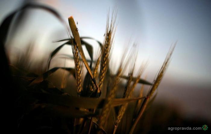В Украине подорожало производство сельхозпродукции