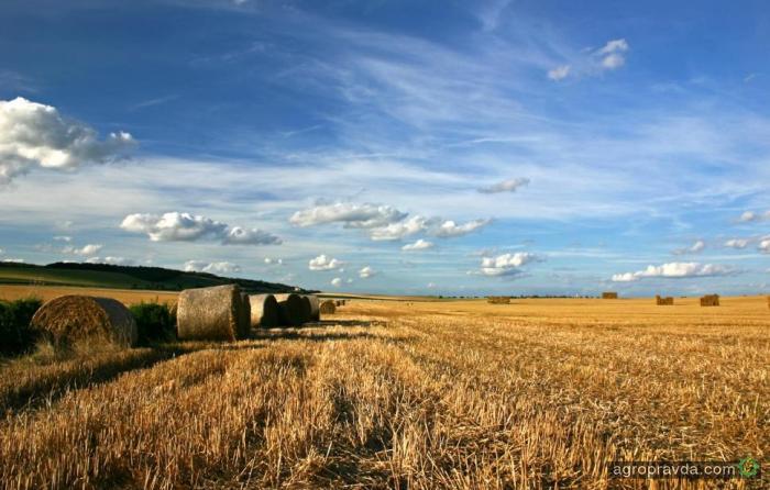 Аграрные ассоциации просят защиты аграриев у президента Украины