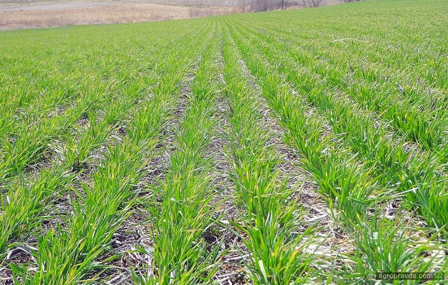 Украинский рынок удобрений требует жидких форм и серы