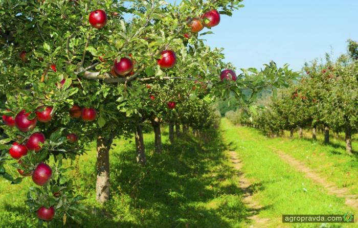 Садоводы рассчитывают на снижение НДС до 7%