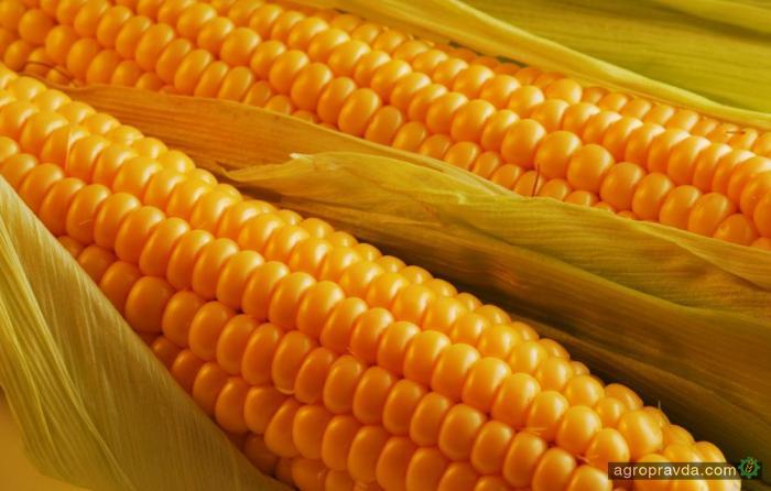 Китайские импортеры переключаются на украинскую кукурузу с американской