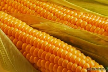 Украина сократила экспорт семян сельхозкультур