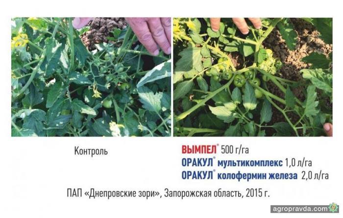 Как увеличить урожайность овощей. Результаты тестов