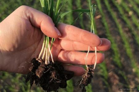 Переваги сівалки OMEGA OO6000FL: досвід аграрія