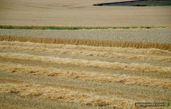 Средние цены реализации агропродукции в Украине выросли на 10%