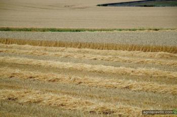 Уже собрано почти 20 млн т зерновых