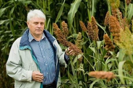 Как получить рекордный урожай сорго