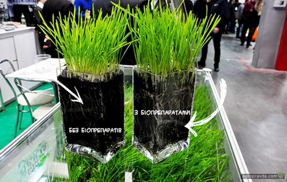 Опыт применения биопрепаратов на озимой пшенице