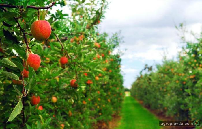 На поддержку садоводства правительство выделило еще 224 млн грн.