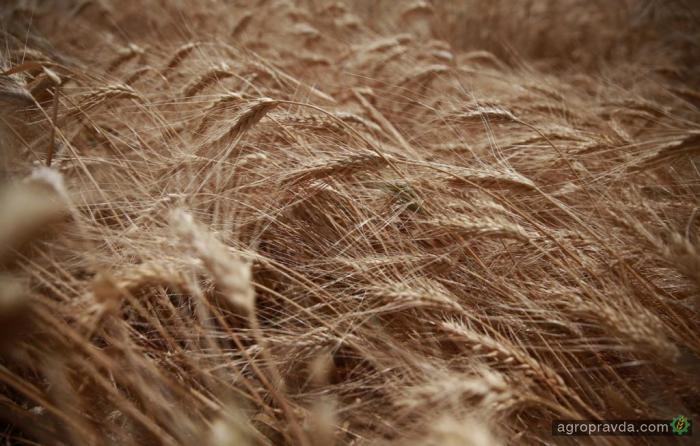 Похолодание не повлияет на урожай озимых и яровых культур