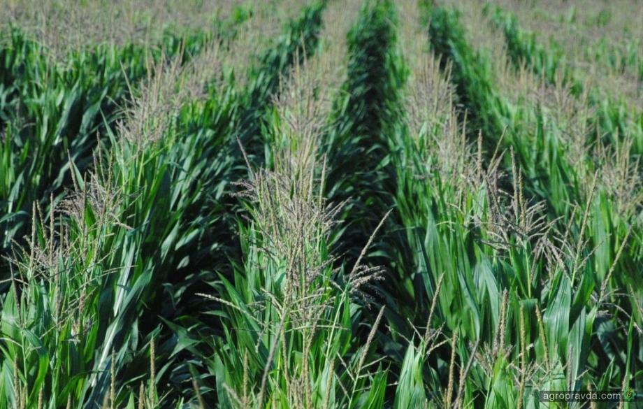 Украинские фермеры выдали первые международные аграрные расписки