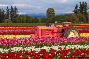Тракторы принарядились к празднику 8 марта. Фото