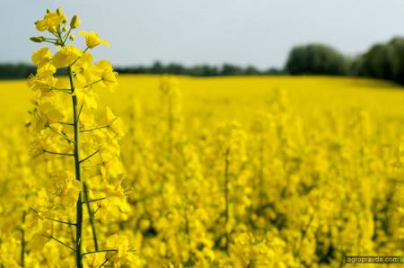 Какие иностранные агрохолдинги обрабатывают земли в Украине