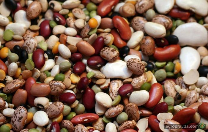 Эксперты рассказали что выгоднее выращивать в Украине