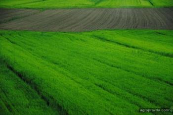 Украинским аграриям предлагают индексное страхование