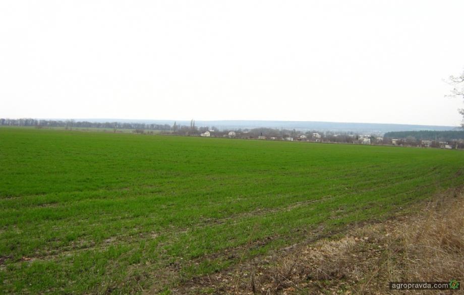 В Украине затягивается начало массового посева озимых
