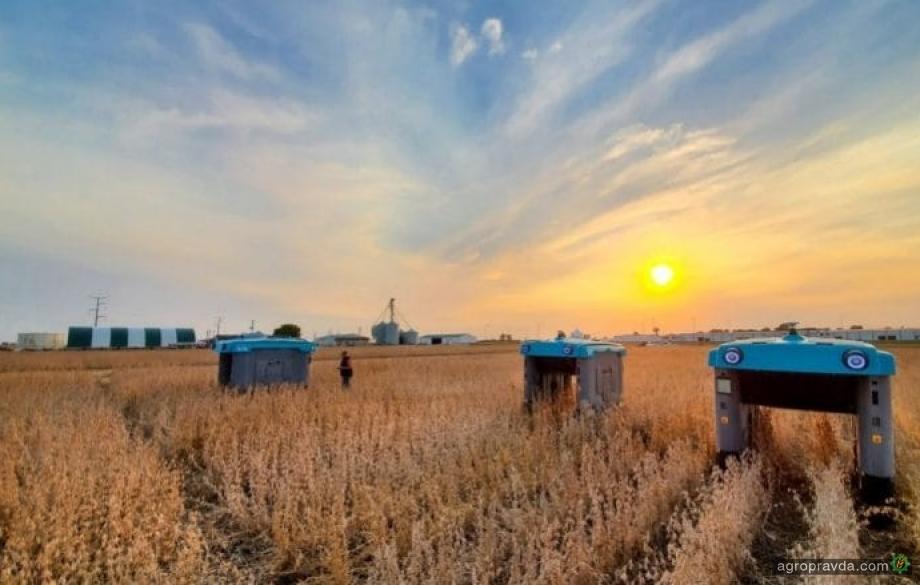Google запускает автономного робота для анализа посевов