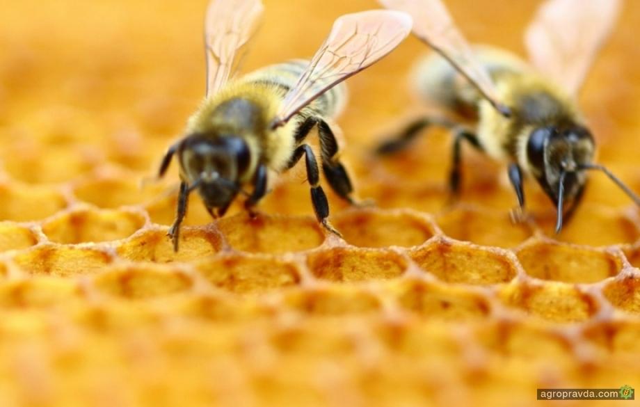 Цена на мед стремительно снижается