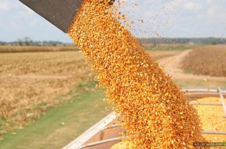 Украина усиливает позиции в мировом рейтинге экспортеров сельхозпродукции