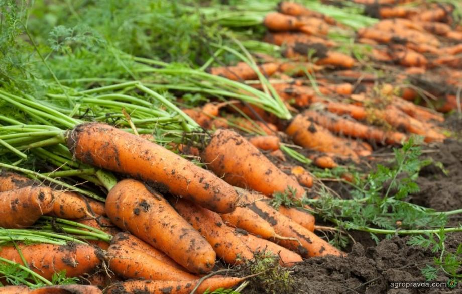 Кабмин утвердил программы развития овощеводства до 2025 года
