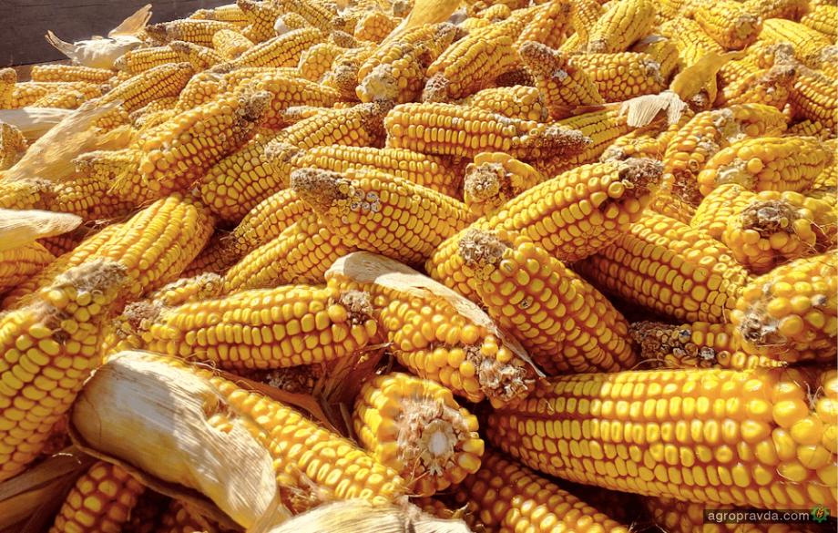 Какие гибриды кукурузы производят в Украине