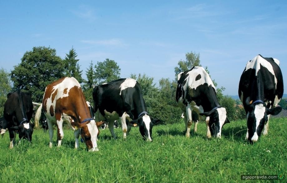 За 10 лет производство молока в Украине может уменьшиться на 12%