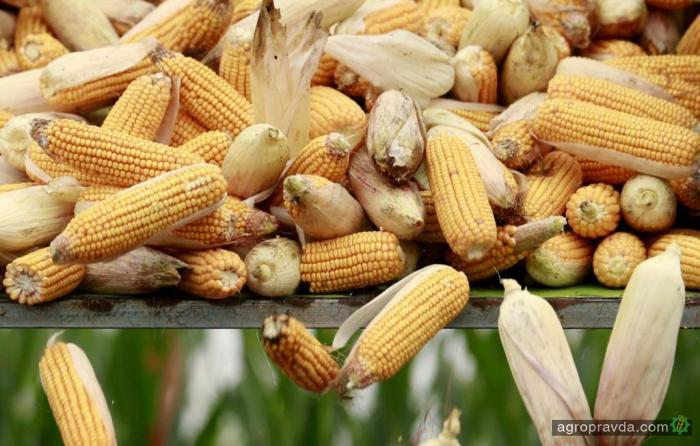 В Украине начат посев кукурузы на зерно