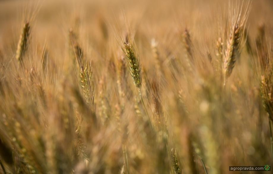 Минагрополитики обнародовало данные по урожайности в 2019 году