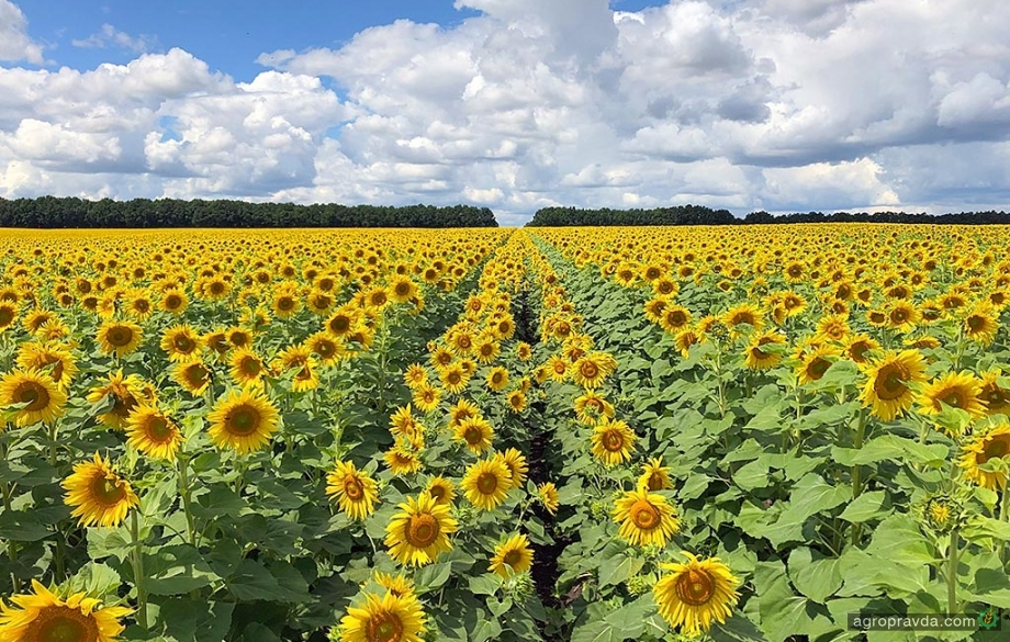 Натуральным средствами обработки семян Corteva Agriscience обработано более 10 млн га