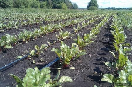 Сахарная свекла на орошении: опыт ООО «Деметра-Агро»