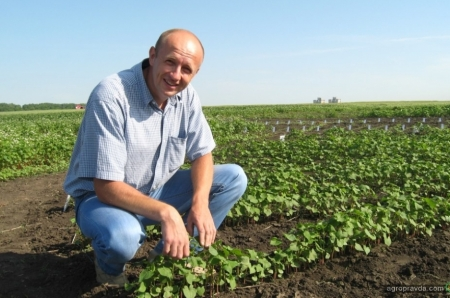 Как лучше вносить бор в посевах