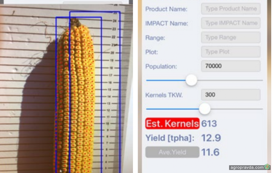 Фермеры получили возможность оценить урожайность кукурузы с помощью смартфона