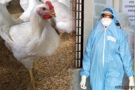 Какие проблемы принес коронавирус мировому сельскому хозяйству