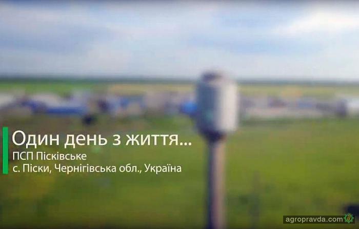 Один день из жизни аграриев: ЧСП «Песковское». Видео