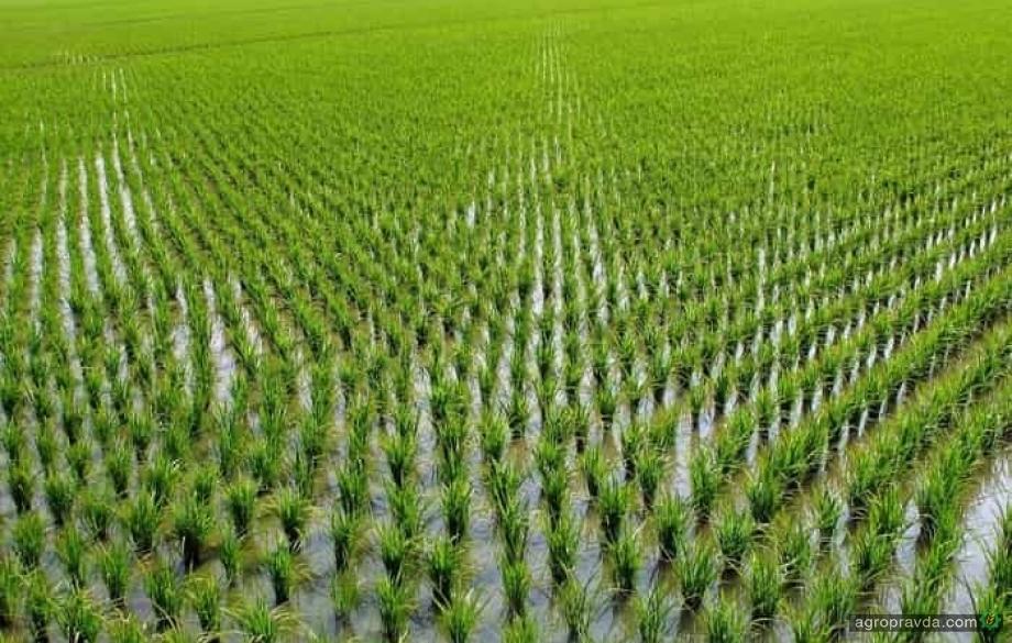 В Украине зарегистрирован новый гербицид