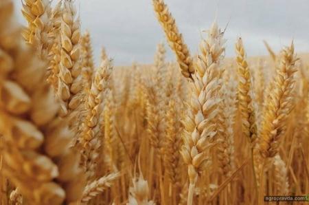 Как кризис изменит цены на агропродукцию