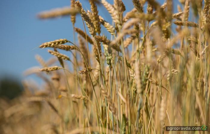 Экспорт зерновых превысил 8,8 млн. тонн
