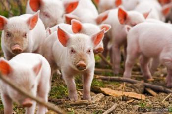 Аграрные расписки пришли в животноводство