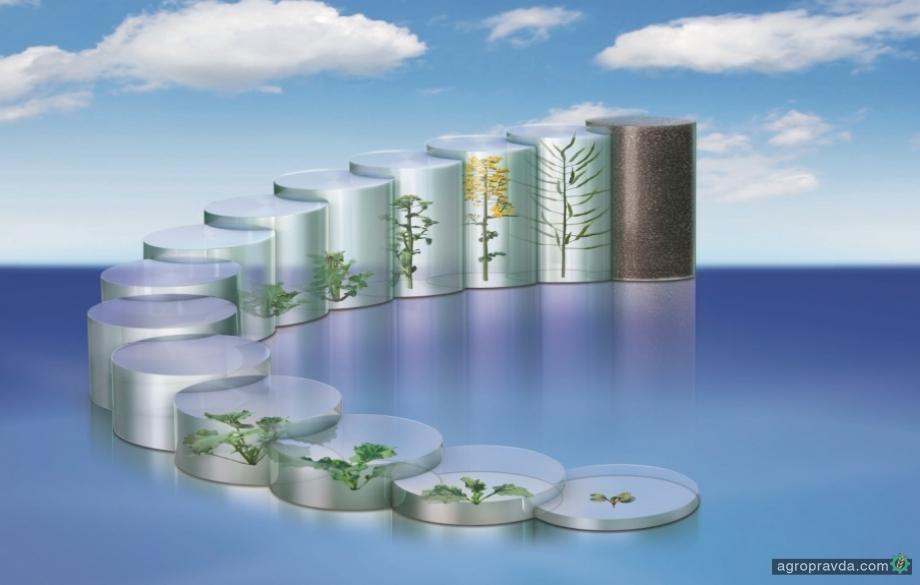 BASF обновил политику продаж семян рапса