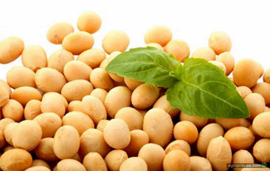 Аграрии теряют более $10 на каждой тоне сои
