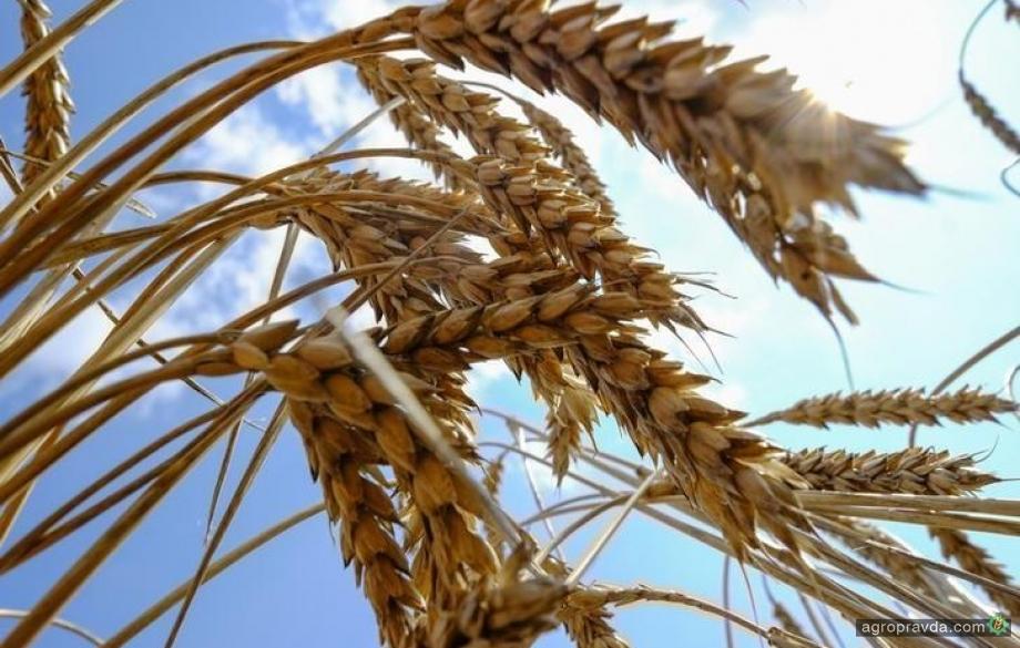 Аграрии сократили переработку зерна на муку