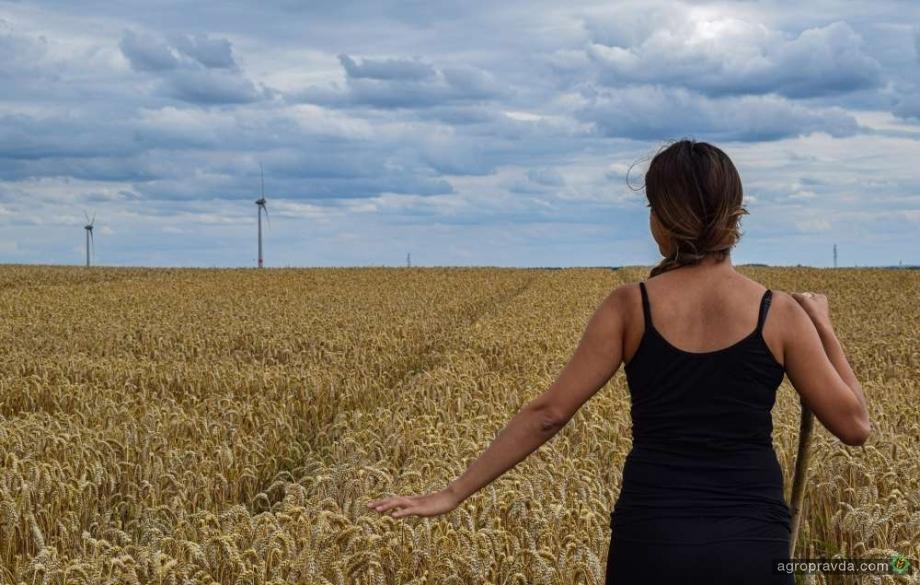В текущем сезоне прогнозируется рекордное производство зерна