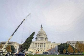 Как перед Капитолием елку ставили. Фото