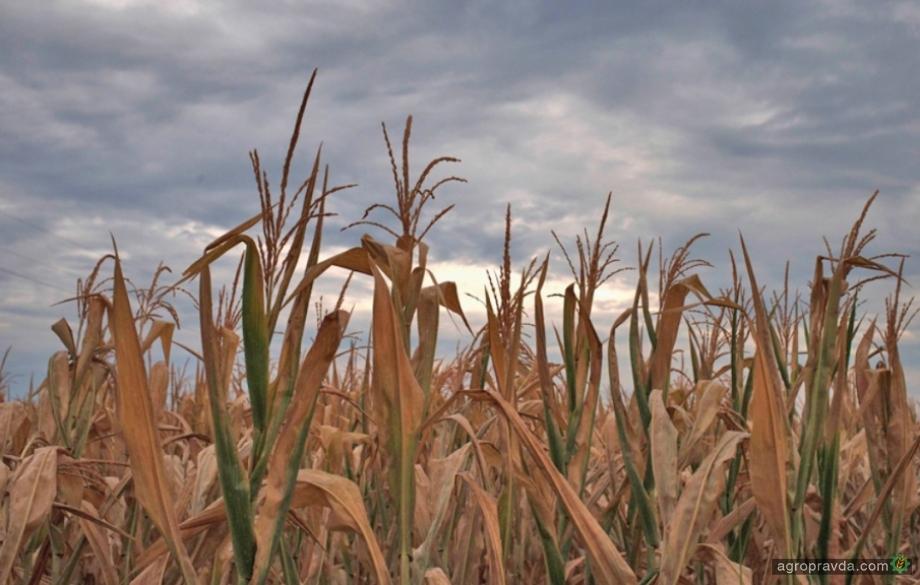 Итоги агросезона-2020: в шаге от катастрофы – мнение