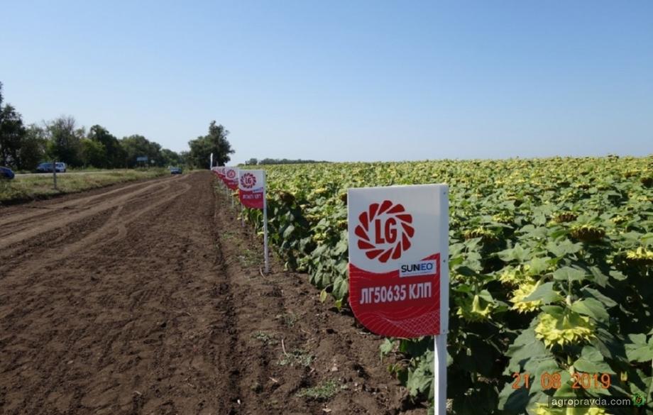Ведущие семенные бренды провели день поля в Днепропетровской области