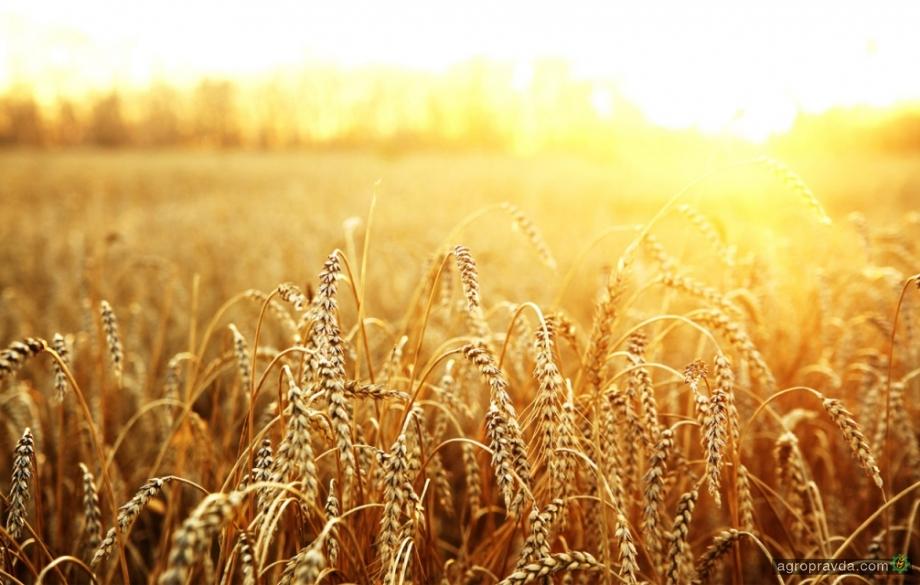 Экспорт зерна приблизился к 18 млн. тонн