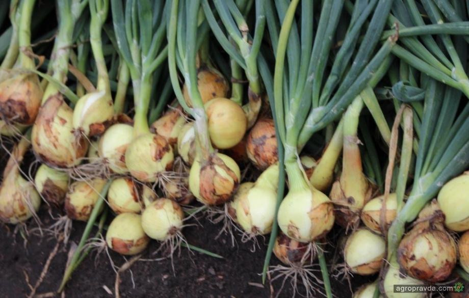 В Херсонской области убирают картофель, лук и морковь